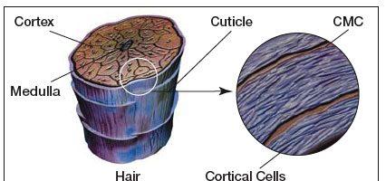 Perché si formano le doppie punte? Perché i capelli si spezzano?